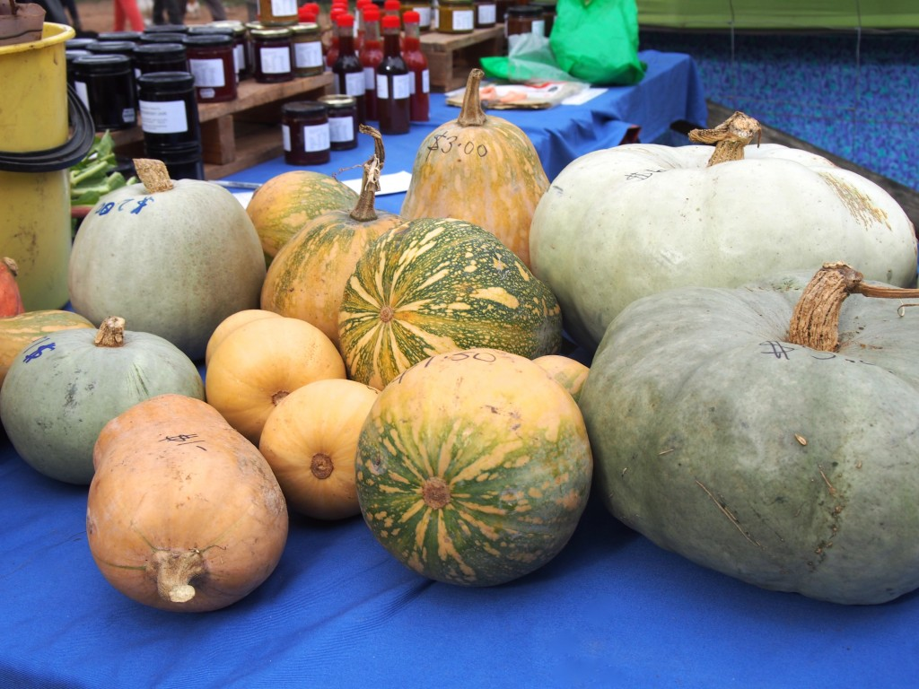 Pumpkins of various shapes and sizes.