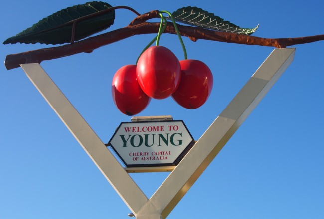 Welcome to Young, Cherry Capital of Australia