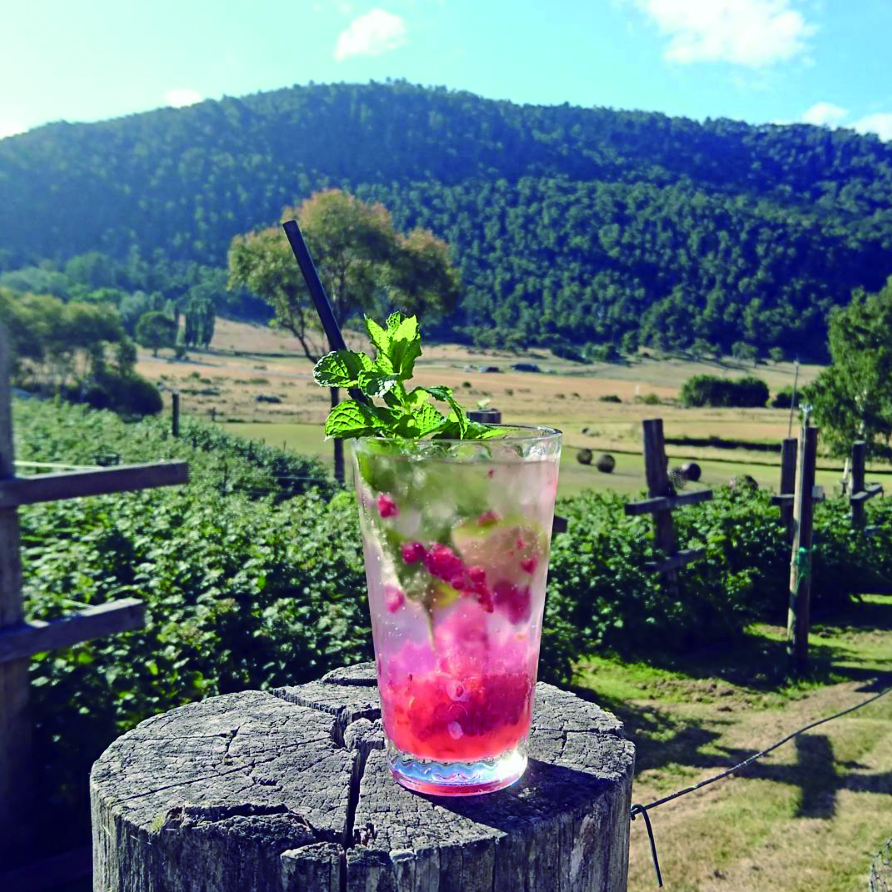 A tall glass is sitting on a wooden stump. The glass is filled with ice, raspberry, mint and pink liquid. A black straw is coming our of the glass. In the background are mountain rangers.