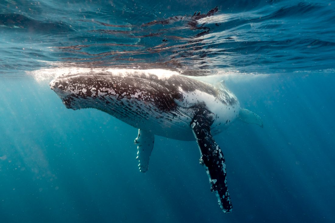 A Shoalhaven winter is full of activities, particularly since it is whale migration season and the wineries in the area are releasing their latest vintages. And let's face it, who doesn't love wine and whales?